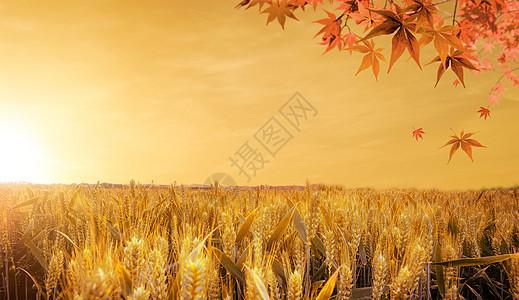 立秋背景图片