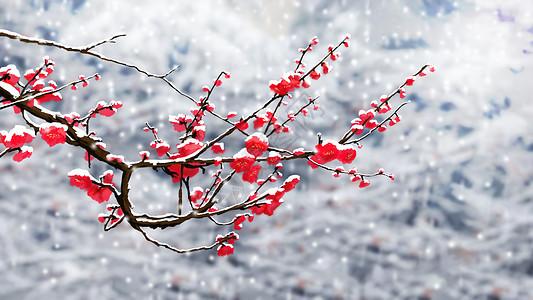 冬天梅花特写图片