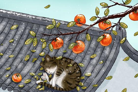 落霜的柿子树和屋顶的猫图片
