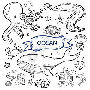 简笔画海洋动物填色插画图片