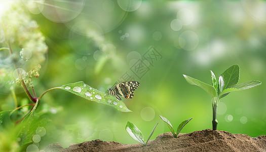 春天小禾苗图片