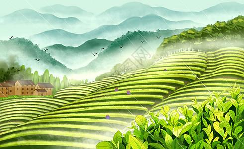 谷雨茶山采茶图片
