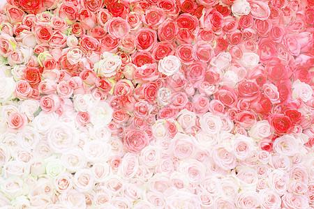 浪漫鲜花墙背景图片
