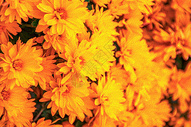 绚丽多彩的油画风格鲜花图片