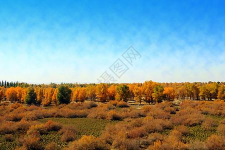 胡杨林公园的风景图片