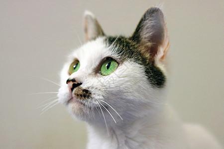 仰望注视的猫咪图片