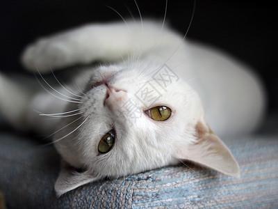 仰睡的猫咪图片