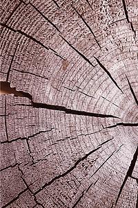 树 年轮图片