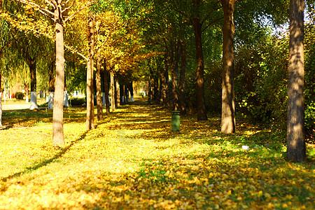 秋天金黄落叶图片