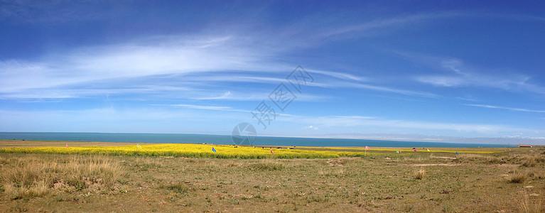 青海湖与油菜花图片
