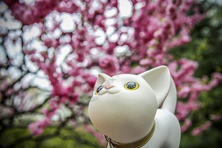 猫赏花图片