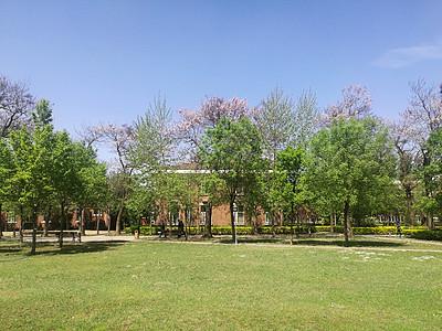 蓝天公园图片