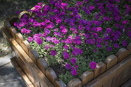 花卉小景图片