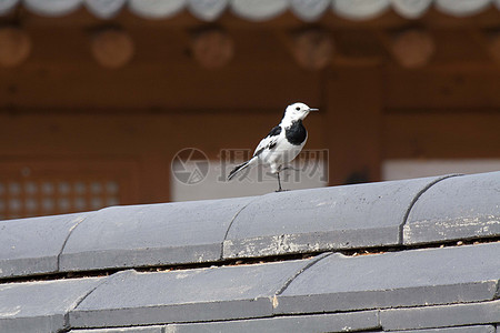 一只鸟停在屋檐上图片
