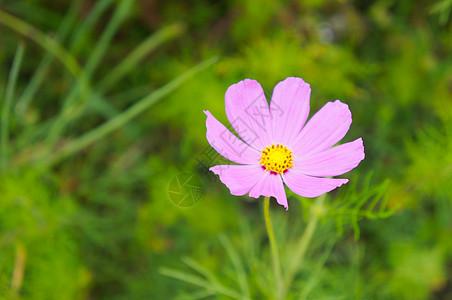 盛开的花朵儿图片