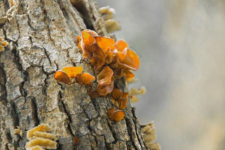 露天椴木木耳种植园图片
