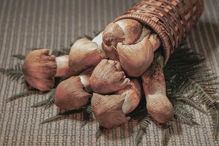 袋料香菇图片