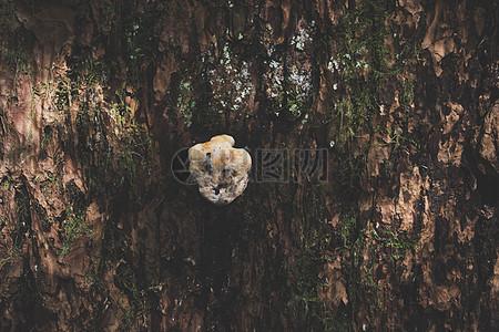 树木上的菌菇图片