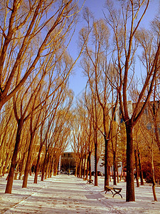 冬季校园小路图片