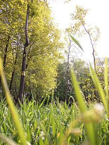 草和树木图片