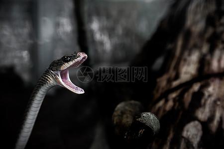 张大嘴的蛇高清图片
