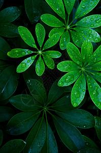 圆形的绿叶图片