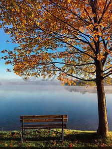 枫树叶下的长椅图片