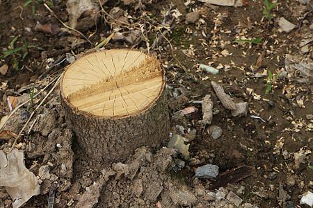 雨后的木桩图片