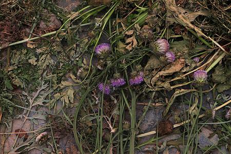 雨后凋零的花朵图片