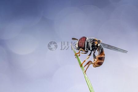 小树苗上的苍蝇图片