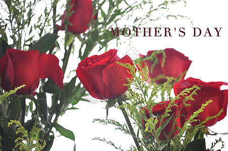 玫瑰花 鲜花图片