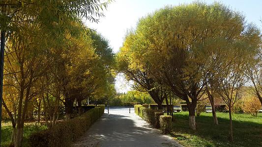新疆城市小区秋景图片