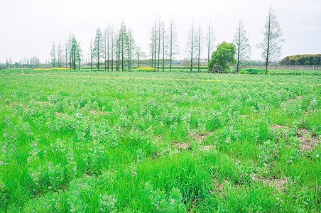 上海郊区田地图片