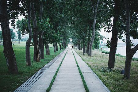 道路旁整齐的小树图片
