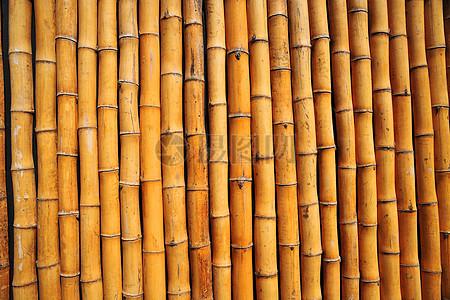 一排排黄色竹竿图片