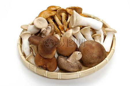 各种各样的蘑菇图片