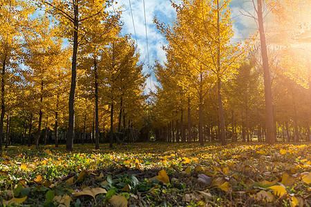 秋日郊外图片