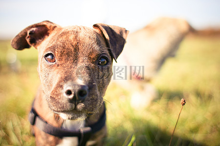 小狗狗的脸部特写图片
