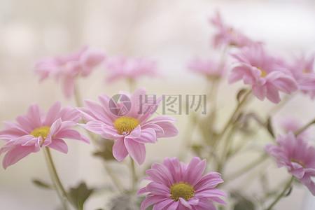 淡粉色的花朵图片