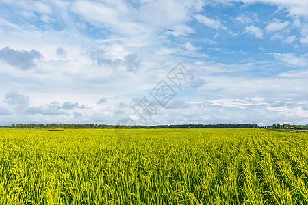 麦田全景图片