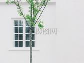 窗外的一棵树图片