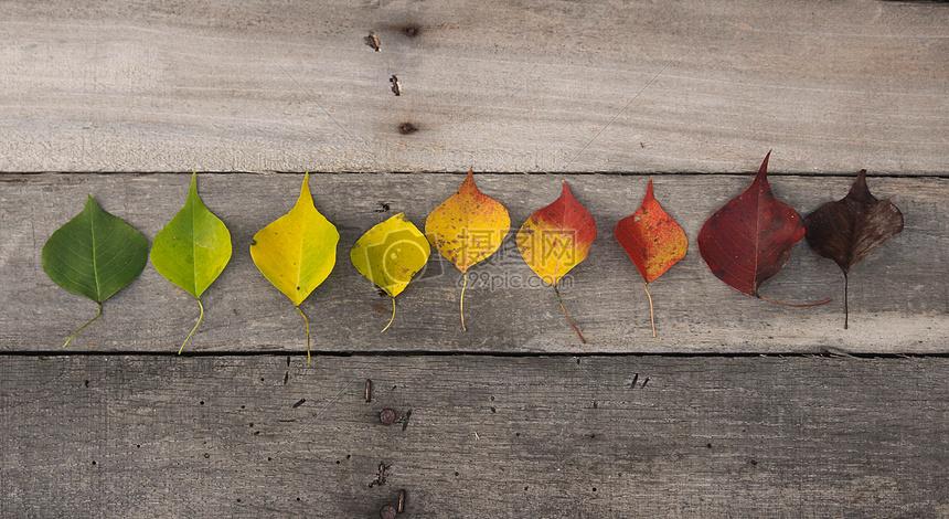 秋天的颜色叶子图片