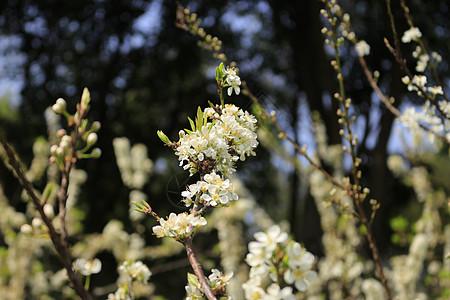 2月蜜蜂采花图片