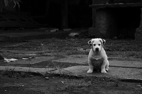白色的呆萌小狗图片