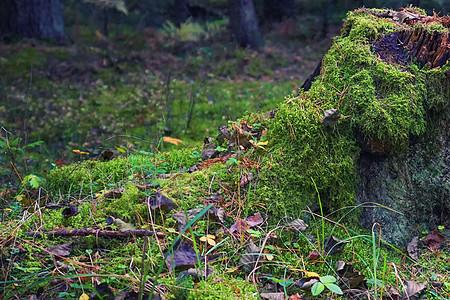 长满草的树根图片