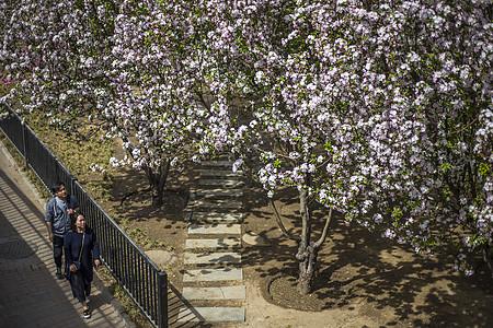 春意盎然 赏花图片