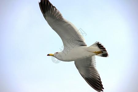 展翅飞翔图片