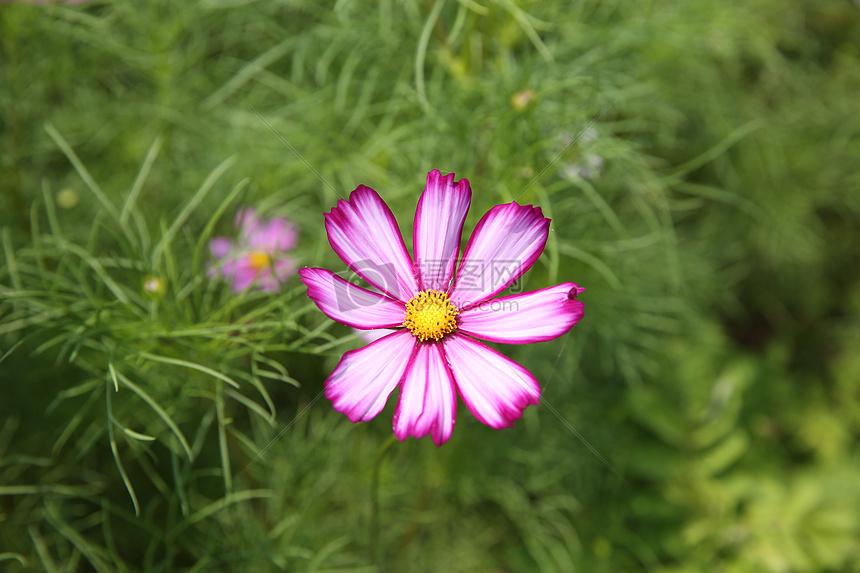 花草 自然风景 枫叶 红色叶子 景观 花朵 小花jpg  分享: qq好友 微信