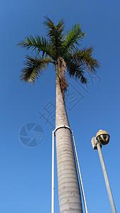 冬日里的椰棕图片
