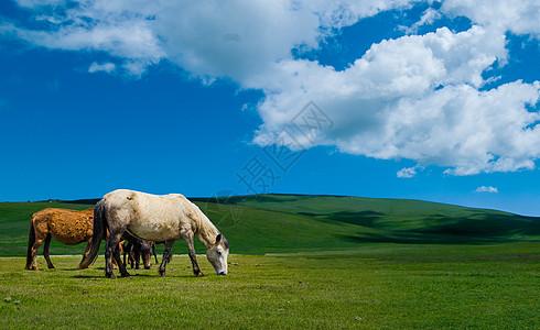 若尔盖草原上的马图片